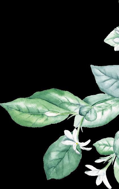 right leaf